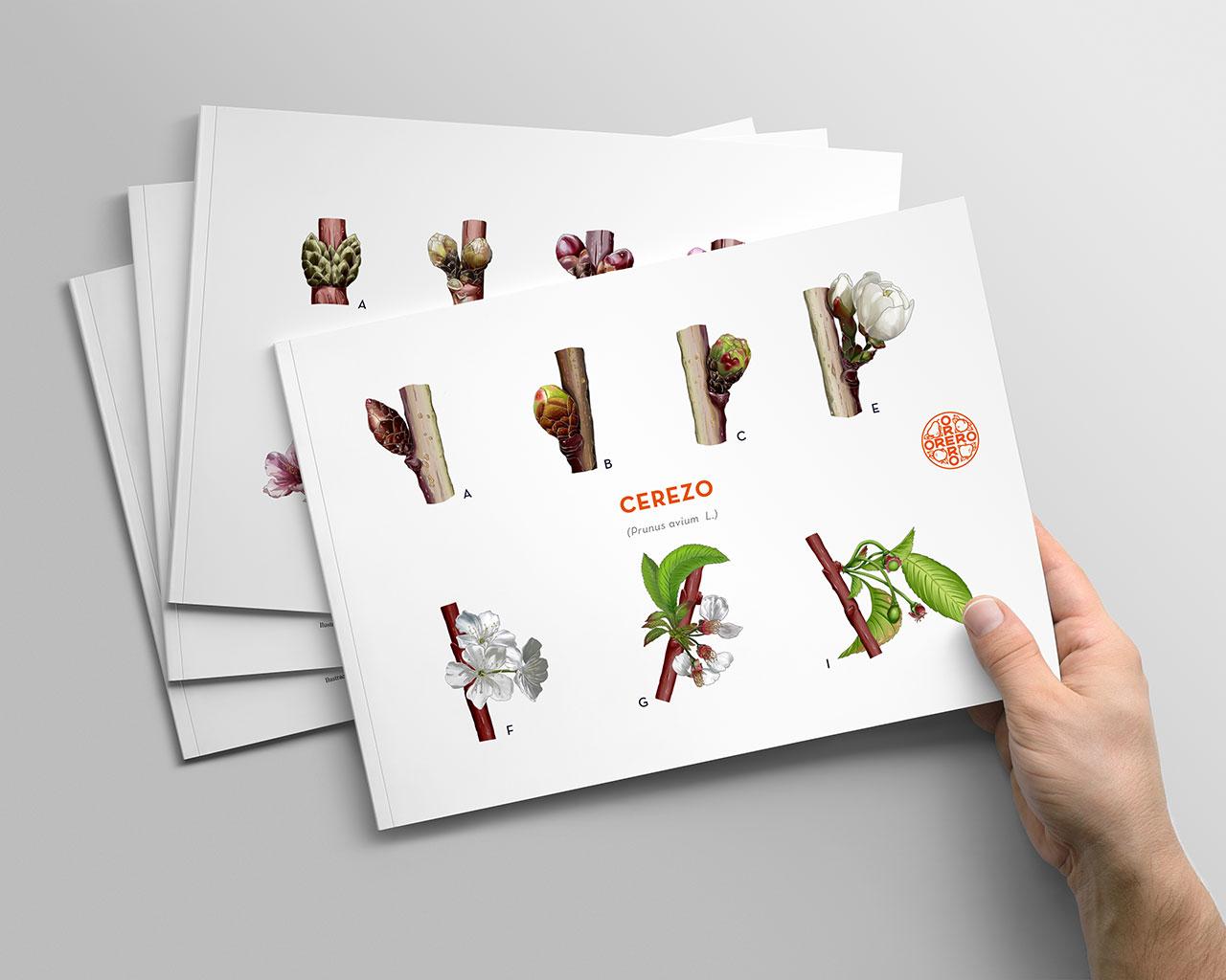 Ilustraciones y manuales de tratamientos fitosanitarios diseñados por Momo & Cía.